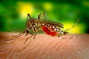 Você tem se protegido contra a Dengue? - HSF